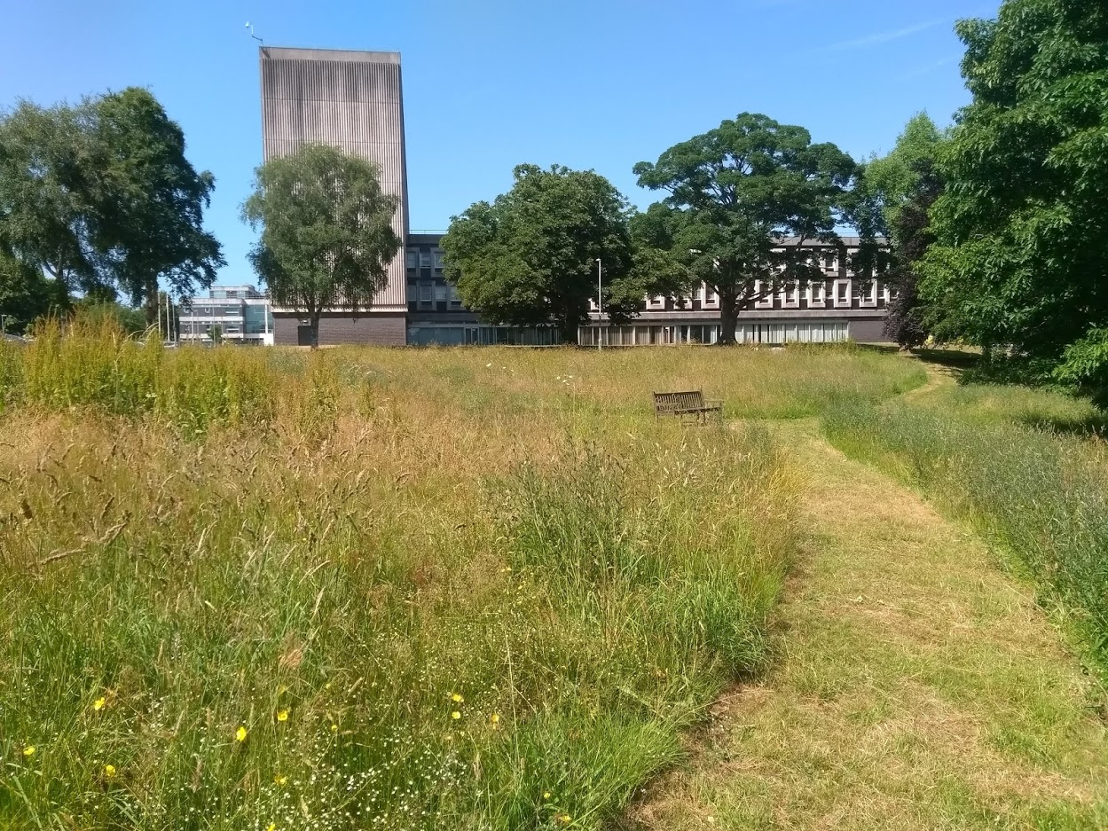 County Hall Coronation Meadow Summer 2019.jpg
